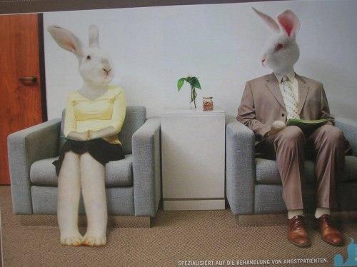Conejos en sala de espera del dentista