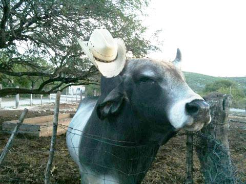 my rancho el sauz youtube juanofwords