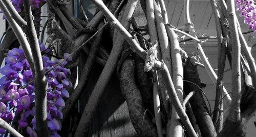 Appleseed,death,elderly,johnny,lady,loss,needs,wisteria