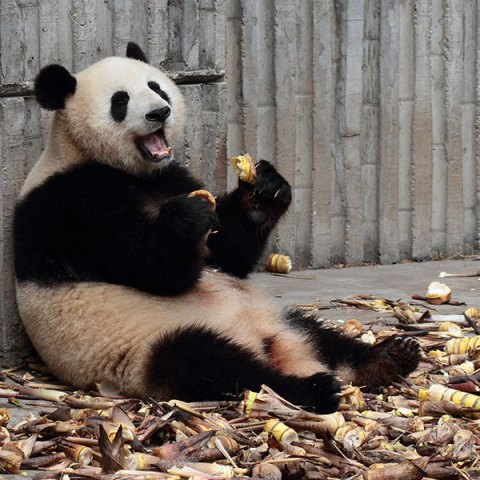 google panda refresh