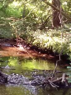 Belden meadow stream