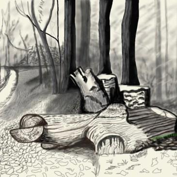 Hockneys Stump