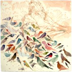 Mallee Birds, 380 X 380 Mm, Watercolour On Paper, 2013