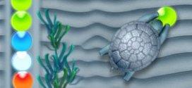 Quick Turtle