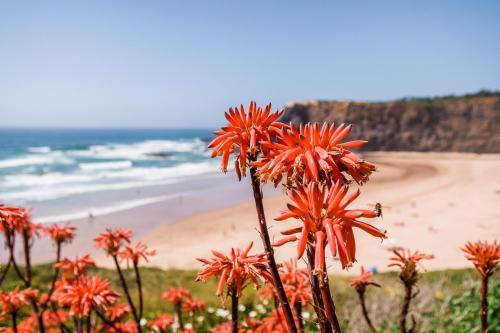 Farbenpracht an der Praia de Odeceixe