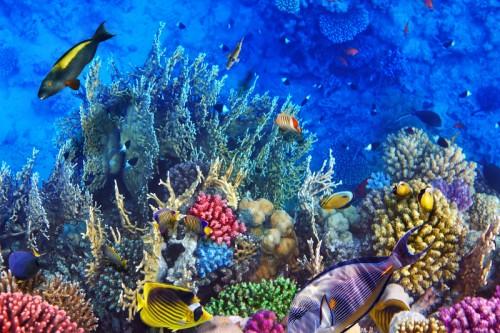 Thema onder water