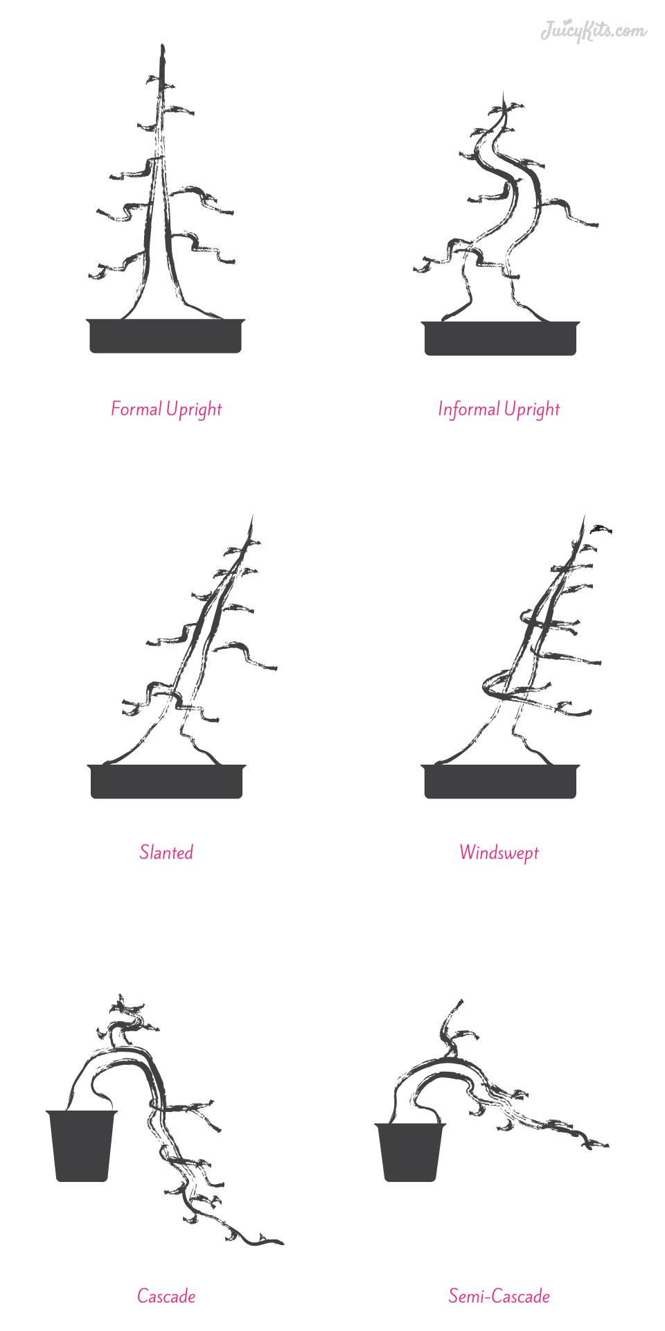 the basics of succulent bonsai