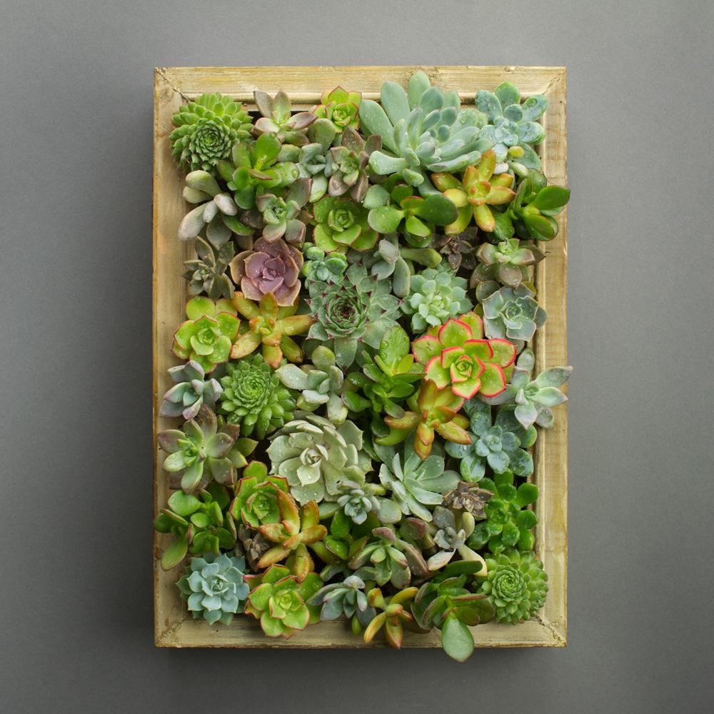 Easy DIY Succulent Living Picture Frame Kit