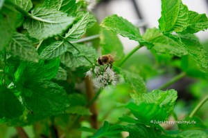 Mint in my garden - Jules HappyHealthy Life Bild