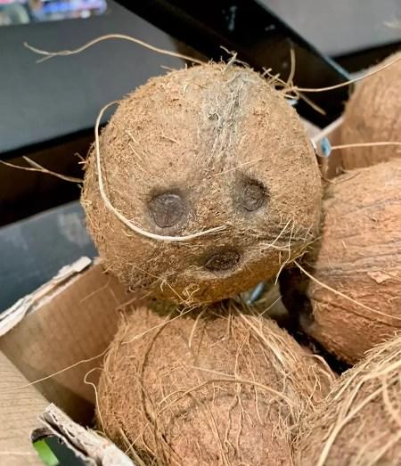 Coconut pet