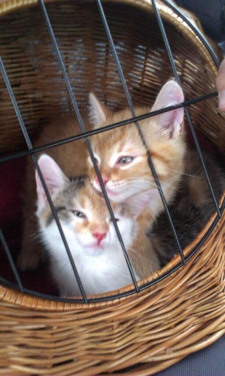 Anton und Pünktchen in einem Weidenkörbchen an dem Tag, an dem sie bei mir eingezogen sind - mit 7 1/2 Wochen.