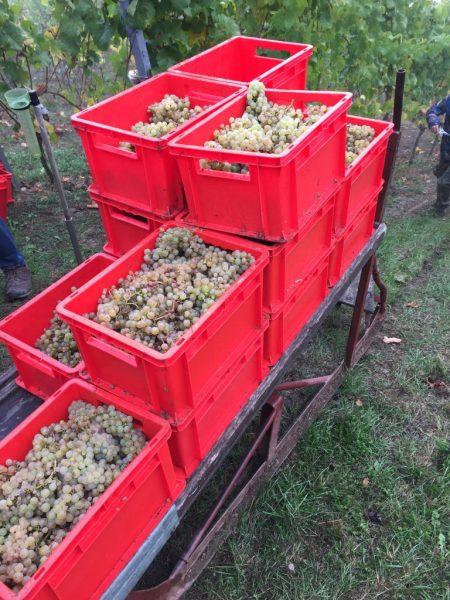Mit Hilfe des sog. Schlittens wurden die Kisten mit den geernteten Trauben den Weinberg hinauf befördert.