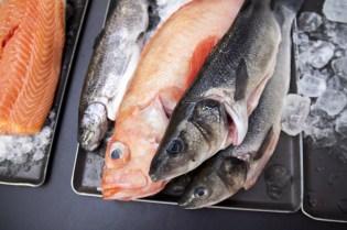 Fisch Vielfalt
