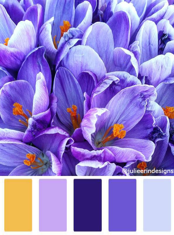 Crocus flower bright purple colour palettes