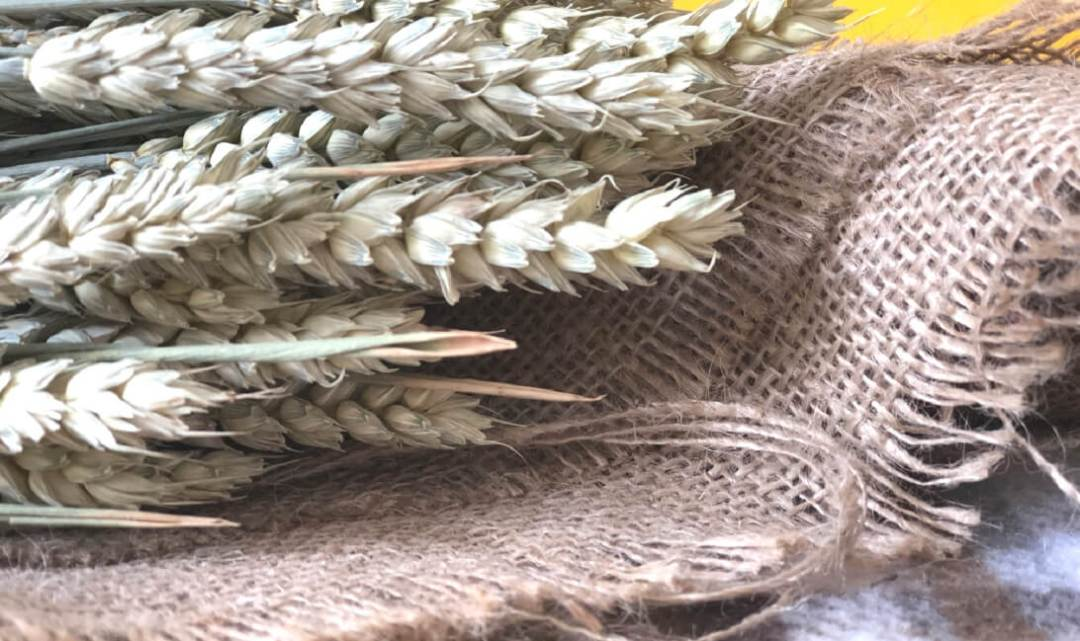 Wheat on Hessian Image