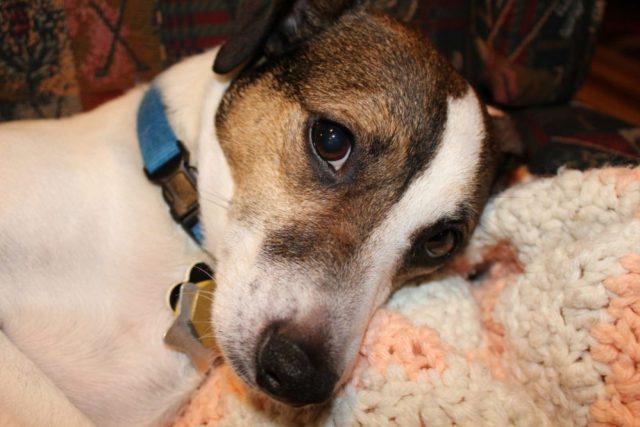 Our dog Kipper
