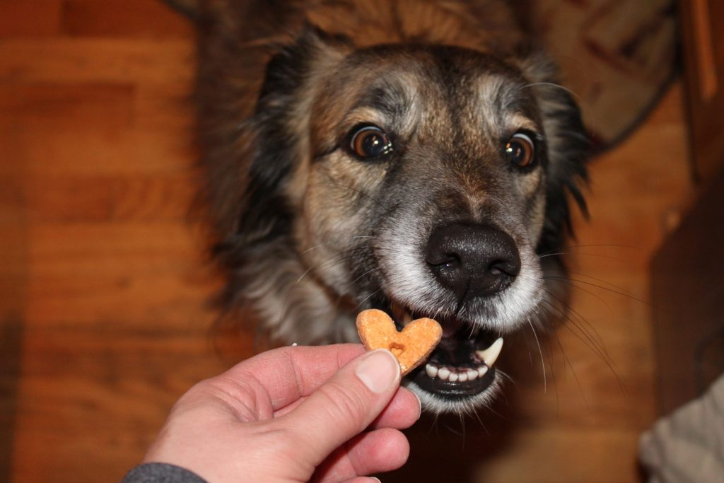 My dog Frida about to enjoy a PupJoy treat. Affiliate.