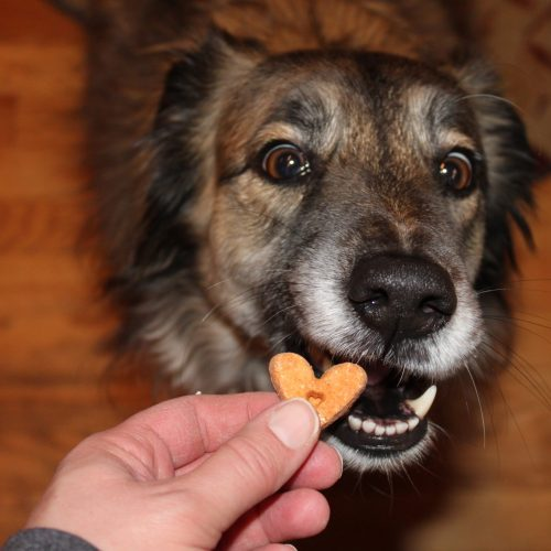 My dog Frida about to enjoy a PupJoy treat.