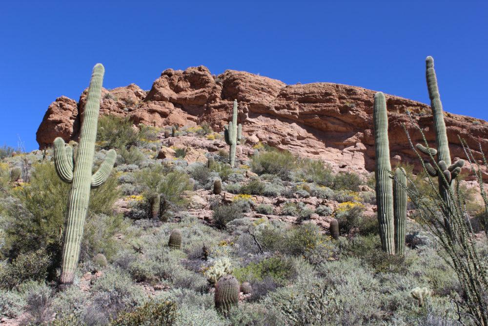 Superstition Mountains Arizona desert hike
