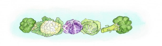 Cauliflower Cabbage and Broccoli