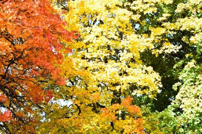 sverige om efteråret