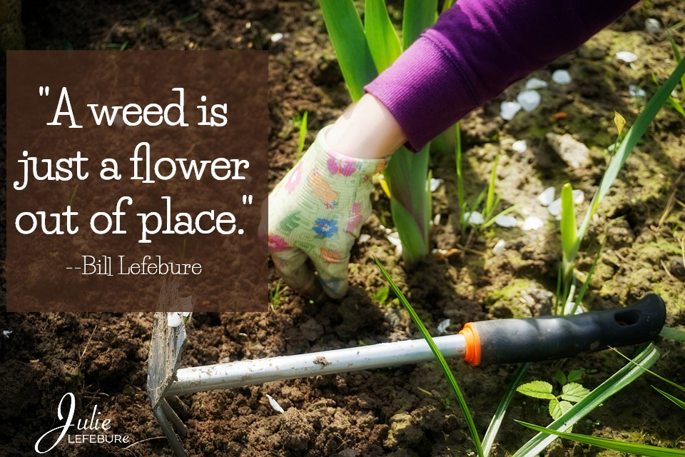 """""""A weed is just a flower out of place."""" --Bill Lefebure"""