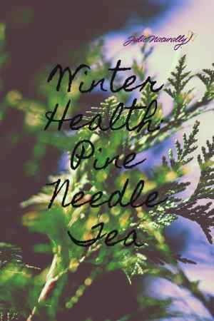 benefits of pine needle tea and how to make it