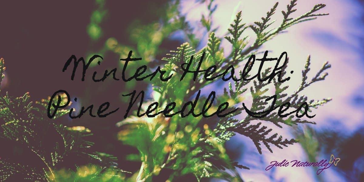 benefits and how to of pine needle tea