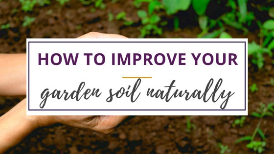 how to improve your soil hands holding soil with cover crops