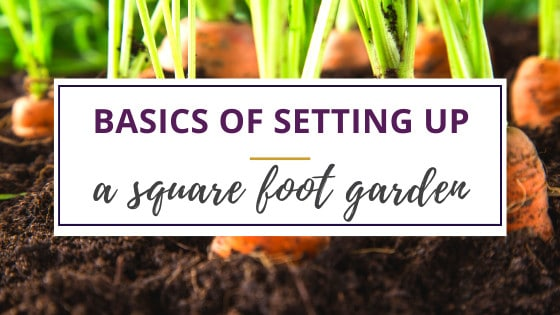 carrots in the ground in a square foot garden method