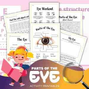 Human Eye Printable Activities