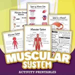 Muscular System Printable Activities