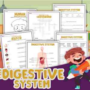 Digestive System Printable Activities