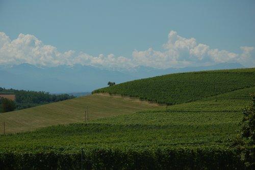 Vignes dans le Piedmont, au pied des Alpes