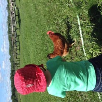Des poules chez Hinterland