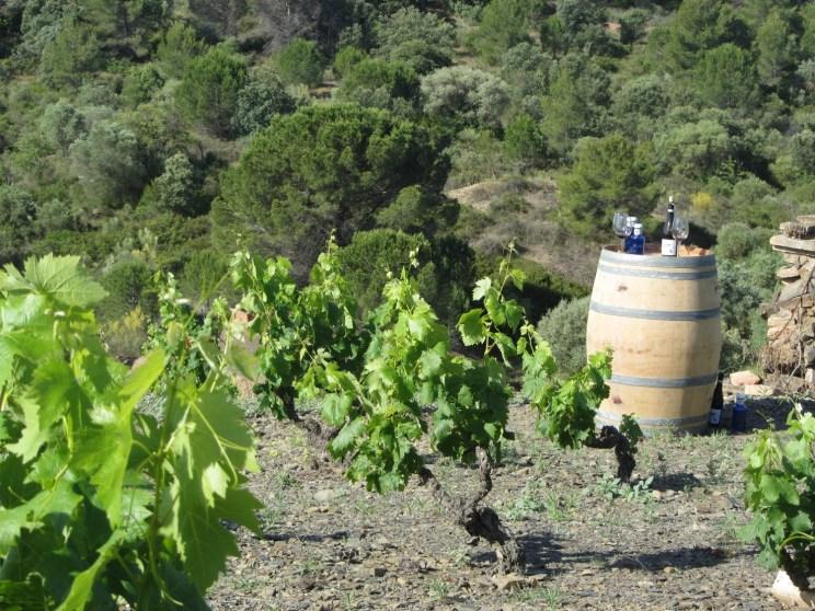 Déguster au sein d'un vignoble presque centenaire