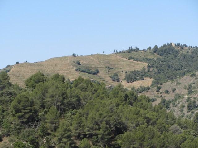 Vignoble de L'Emita, une pente abrupte faisant face au nord, tout juste à la sortie de Gratallops.