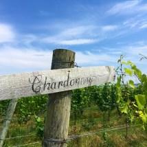 Certaines des plus vieilles vignes de Chardonnay de la Nouvelle-Écosse
