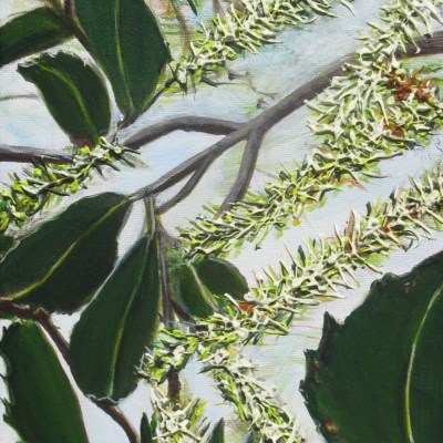 ©Julie Schofield, Breathing Macadamia Flowers, Acrylic on Canvas, 51 x 20.5