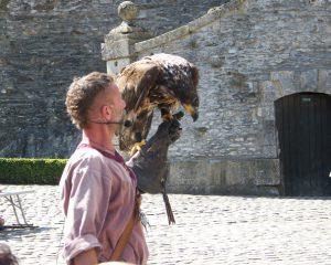 steppe-eagle-at-chateau-de-bouillon
