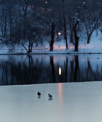 birds-body-of-water-branches-1720113
