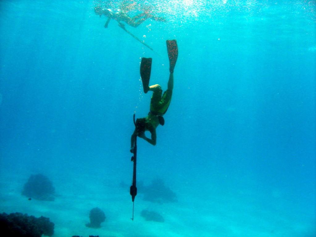 Bora Bora Dive 1