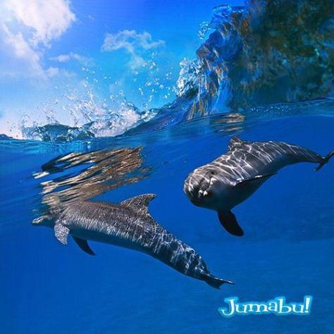 delfines-mar-nadando-saltando-isla-bajo-mar