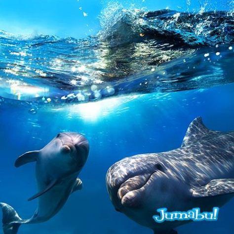 delfines-mar-nadando-saltando-jugando