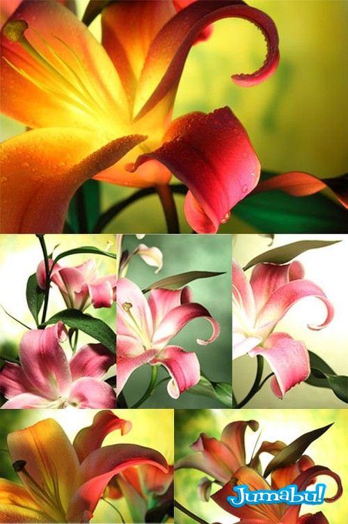 petalos-coloridos-hd-imagenes