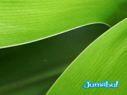 textura hojas verdes jpg 01 500x375 - Texturas de Hojas Verdes