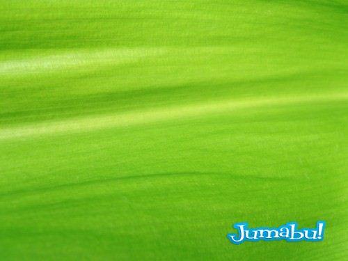 textura hojas verdes jpg 03 500x375 - Texturas de Hojas Verdes