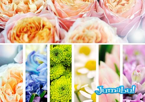 flores-hd-imagenes-gratuitas