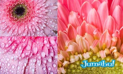 flores-margaritas-coloridas