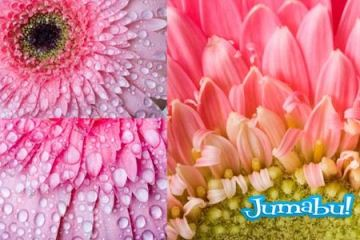 flores margaritas coloridas - Imágenes de Flores de Colores en HD